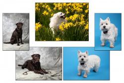 Portraitfotografie Tiere